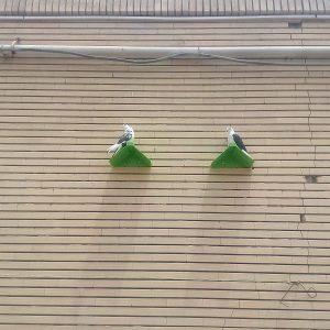 نشیمنگاه کبوتر | نوین پت شاپ