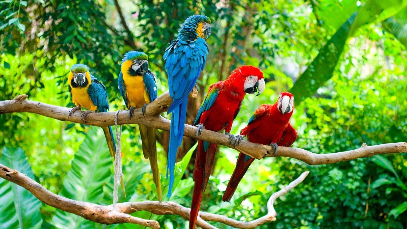 10 پرنده خانگی برتر | نوین پت شاپ