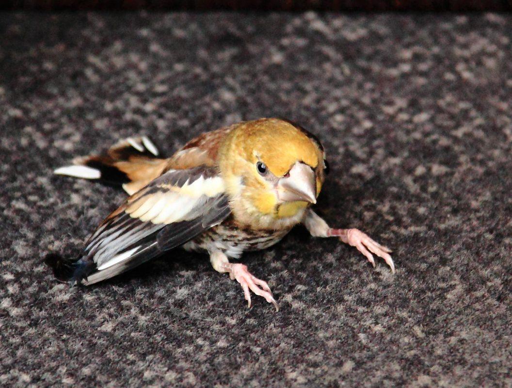 آسیب دیدگی پرنده | نوین پت شاپ