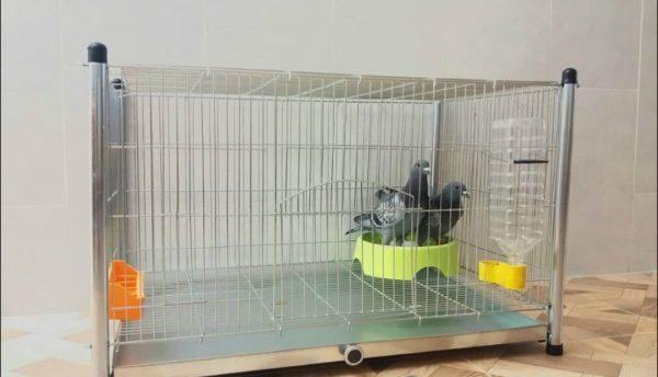 قفس کبوتر | نوین پت شاپ