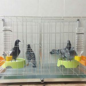 قفس کبوتر کد 90 | نوین پت شاپ