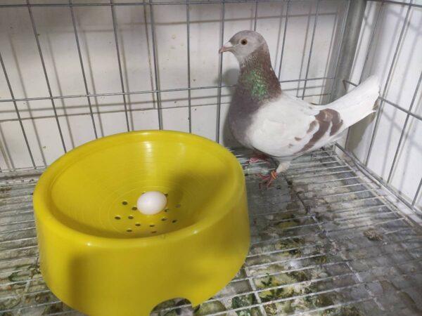 آشیانه کبوتر طرح بلژیکی | نوین پت شاپ