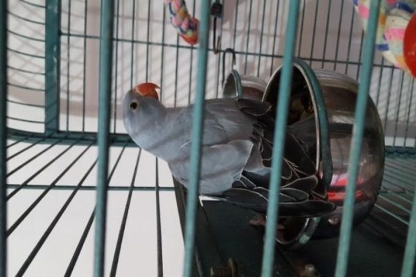 قرنطینه پرنده | نوین پت شاپ