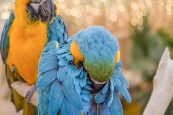 خواب پرنده | نوین پت شاپ