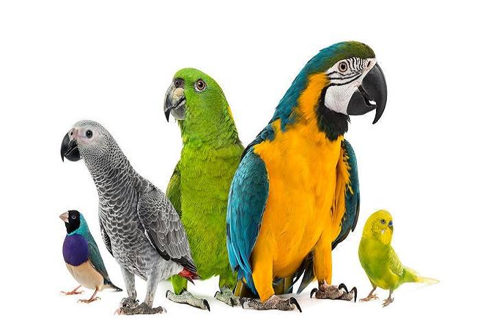 دارو پرنده | نوین پت شاپ