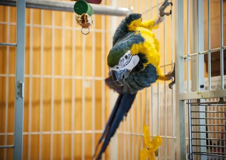 قفس پرنده | نوین پت شاپ