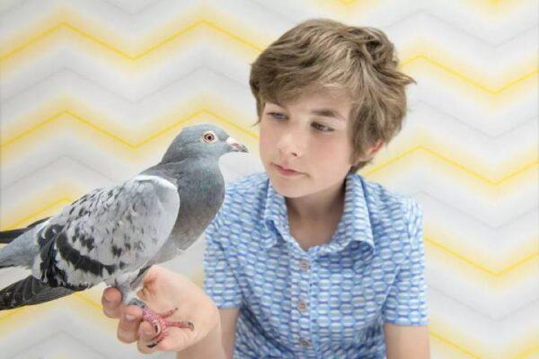 بیماری کبوتر | نوین پت شاپ