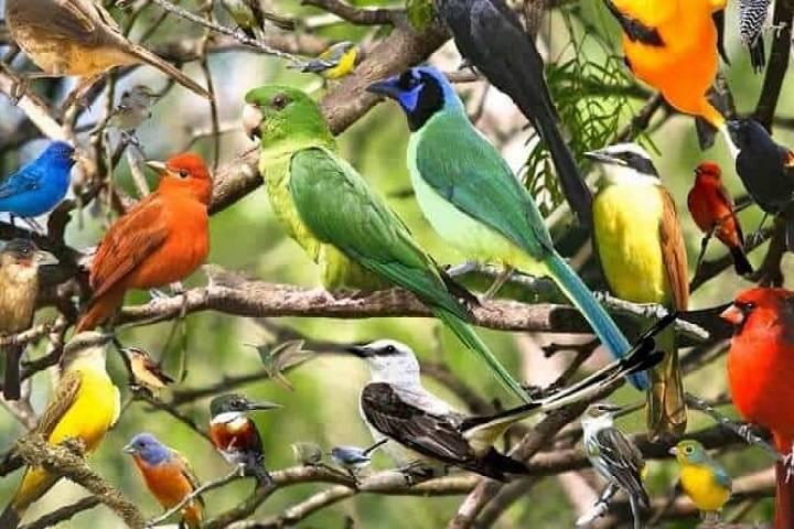 نگهداری پرنده | نوین پت شاپ