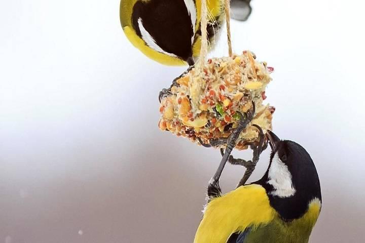 انرژی و پروتئین | نوین پت شاپ